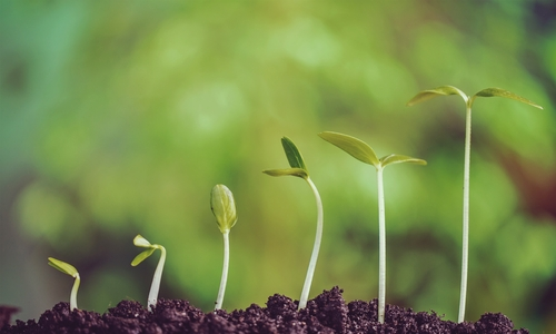 Business Expansion: Can Your Business Grow Too Big Too Fast?